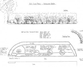 Herbaceous Border Planting Plan