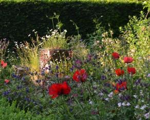 Poppies in the Wild Life Garden