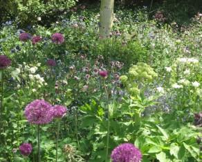 Spring Planting in a Wildlife Garden